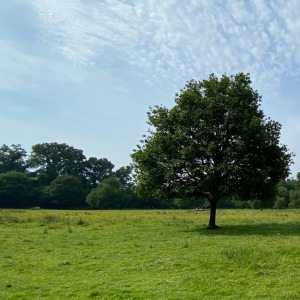 Lagan-Meadows-Forest-Park-Tree-Alone